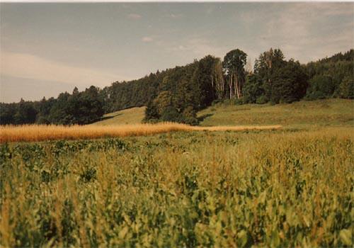 Dammanlage westlich der Ortsverbindungsstraße Erpfting - Ellighofen